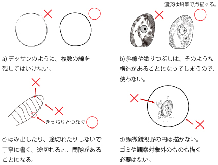 印刷 pdf 印刷の仕方 : 生物学実験/スケッチの描き方 ...