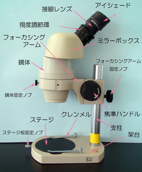 生物学実験/実体顕微鏡の使い方 ...